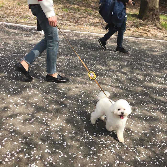 강아지와 산책